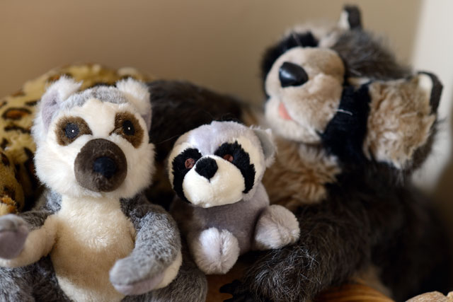 Winston's basket of 'coons